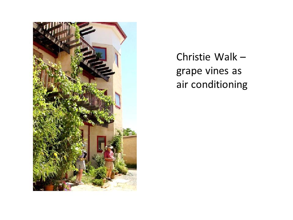 Christie Walk – grape vines as air conditioning