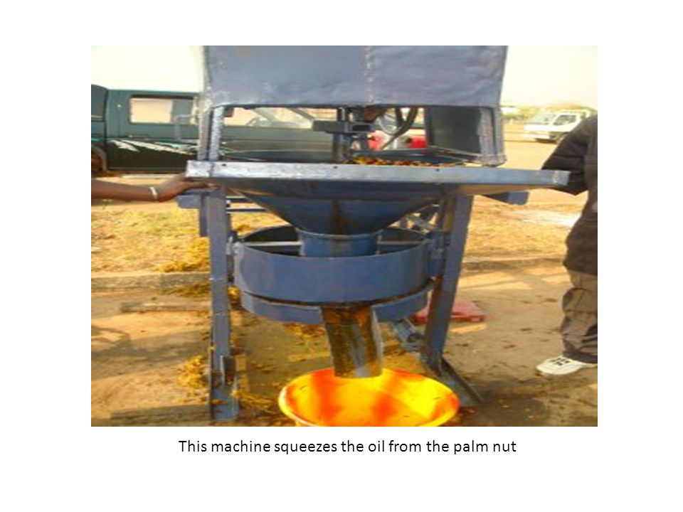 This machine squeezes the oil from the palm nut