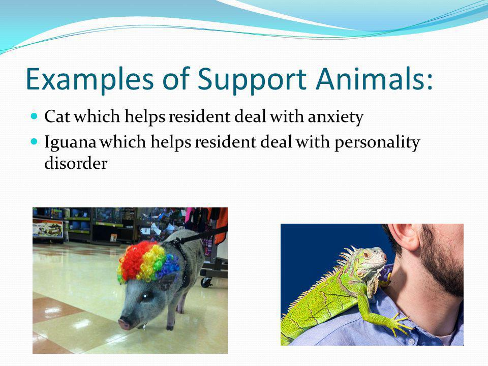 Examples of Support Animals: Cat which helps resident deal with anxiety Iguana which helps resident deal with personality disorder