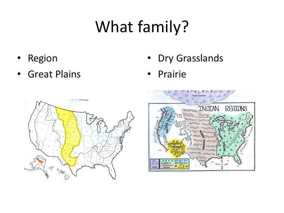 What family? Region Great Plains Dry Grasslands Prairie