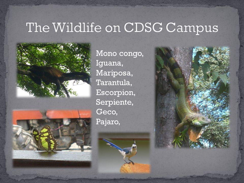 Mono congo, Iguana, Mariposa, Tarantula, Escorpion, Serpiente, Geco, Pajaro,