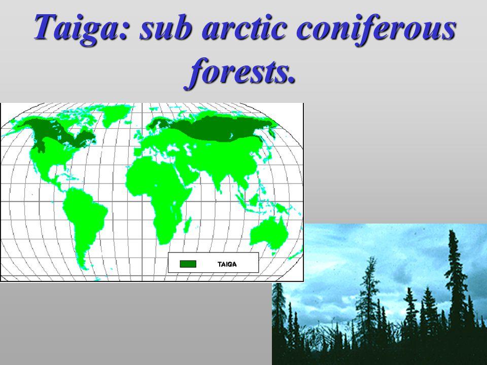 Taiga: sub arctic coniferous forests.