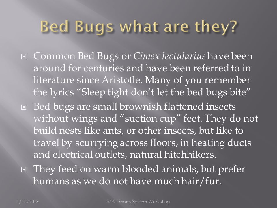 Common Bed Bugs or Cimex lectularius have been around for centuries and have been referred to in literature since Aristotle.