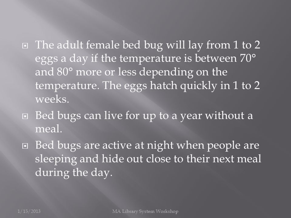 The adult female bed bug will lay from 1 to 2 eggs a day if the temperature is between 70° and 80° more or less depending on the temperature.