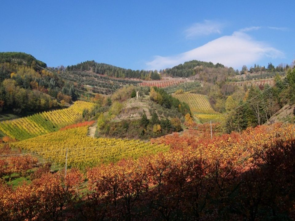 TYPICAL PRODUCTS Balsamic vinegar of Modena, Parma ham, Parmigiano Reggiano and Piadina