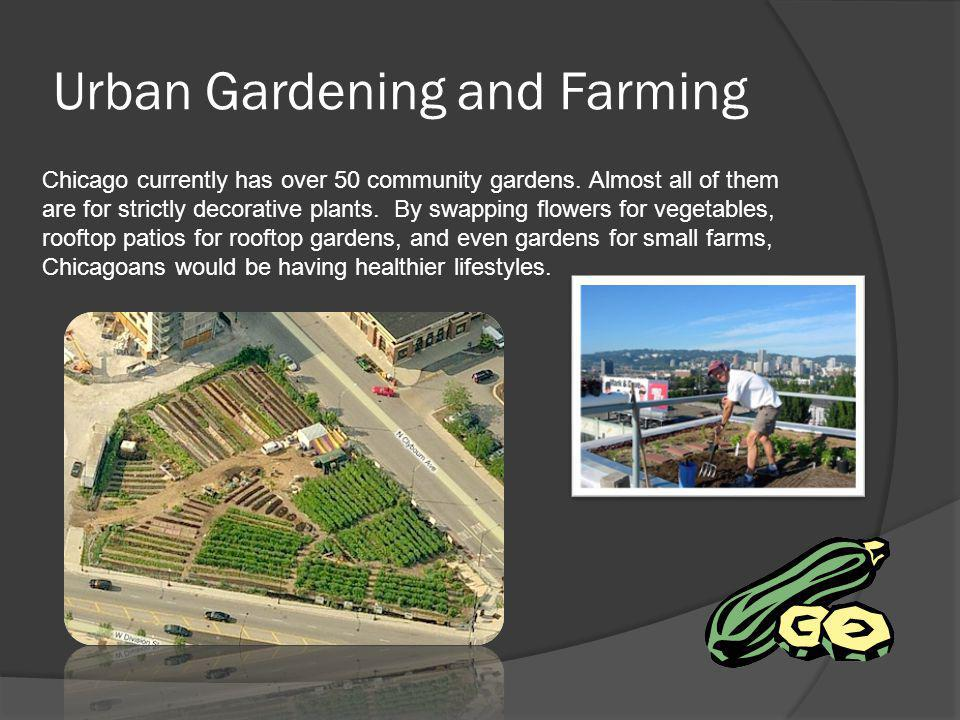 Urban Gardening and Farming Chicago currently has over 50 community gardens. Almost all of them are for strictly decorative plants. By swapping flower