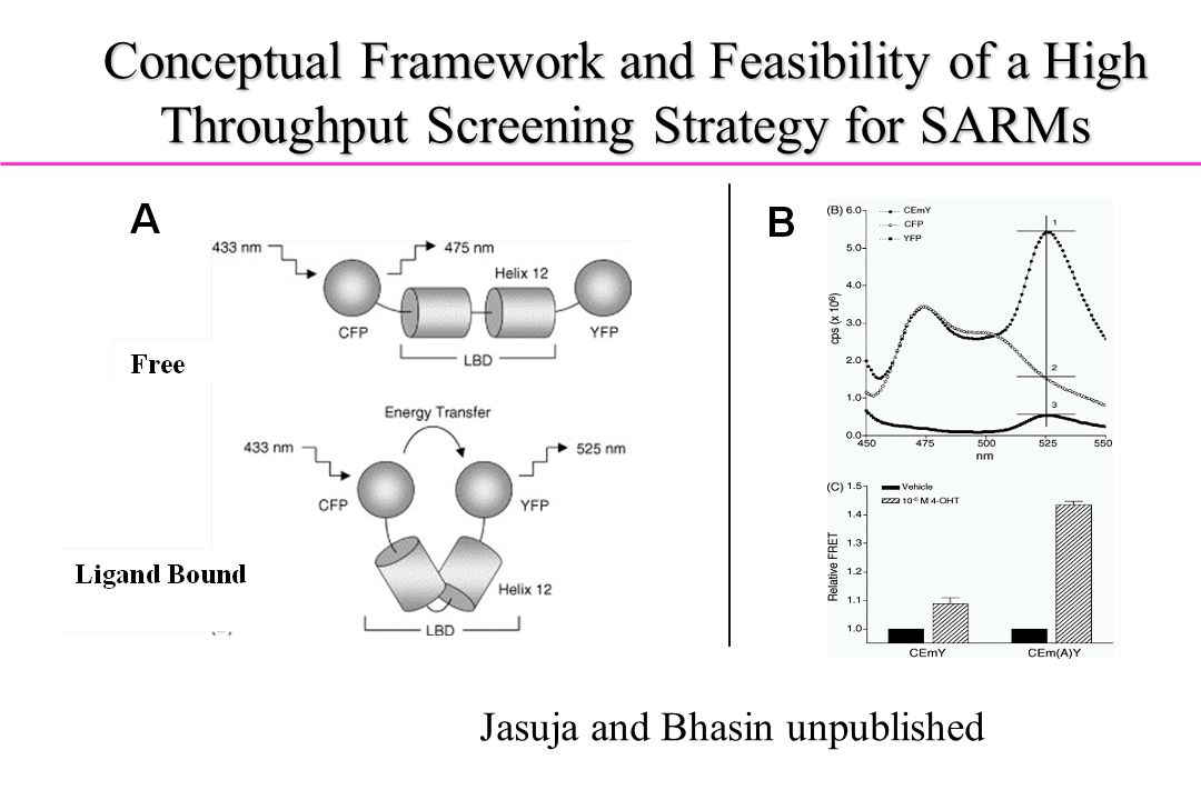 Conceptual Framework and Feasibility of a High Throughput Screening Strategy for SARMs Jasuja and Bhasin unpublished