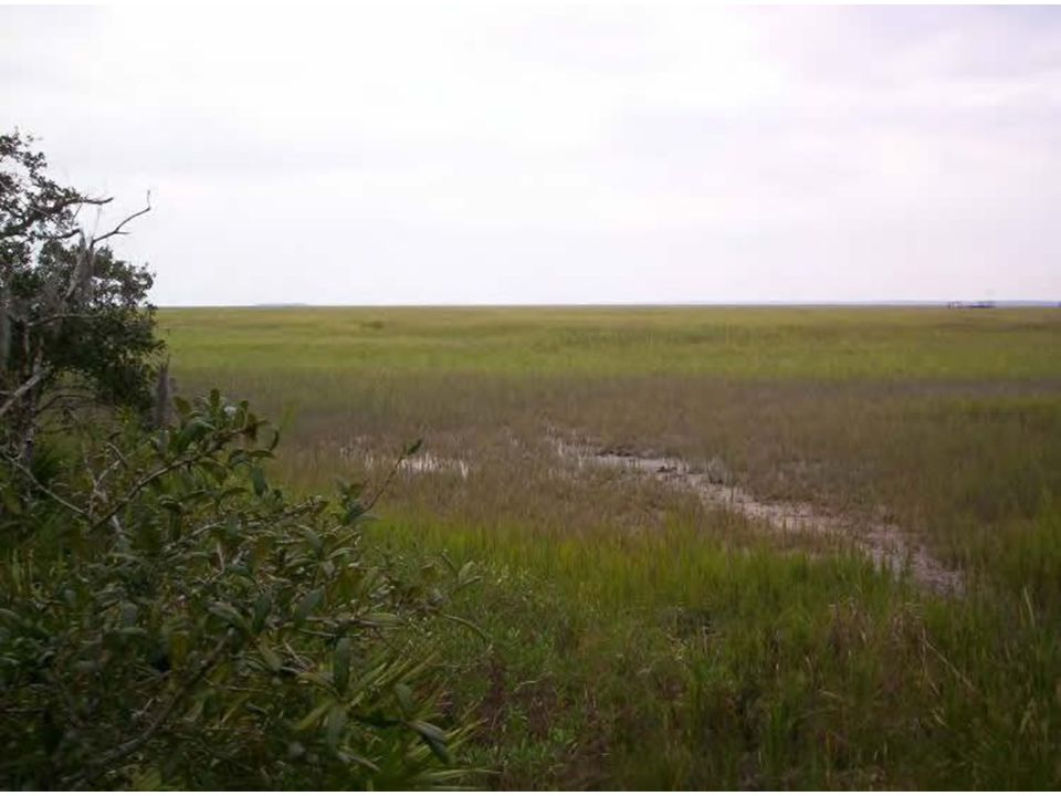 Coastal Marshlands Property maintained in natural state Restrict development and encroachment into area Promote use of conservation easements to protect marshland Promote areas as passive-use recreation destinations Support use for shellfish aquaculture as appropriate Encourage restoration of oyster reefs Require use of naturally vegetated, adjacent buffers Restrict/discourage use that may contribute to pollution Enforce adjacent erosion and sedimentation control Improve coordination with GDOT on clearing/cutting projects Restrict signage within or adjacent to, or with views of, marsh