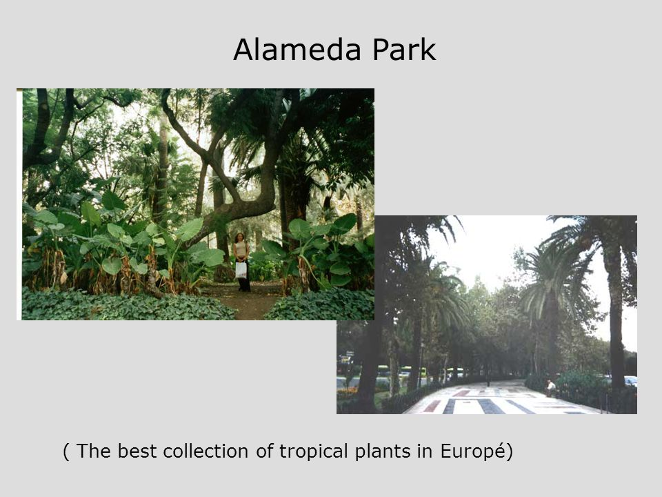 Almeda Alameda Park ( The best collection of tropical plants in Europé)