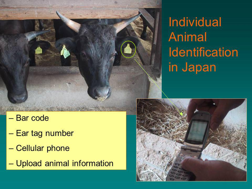 – Bar code – Ear tag number – Cellular phone – Upload animal information Individual Animal Identification in Japan