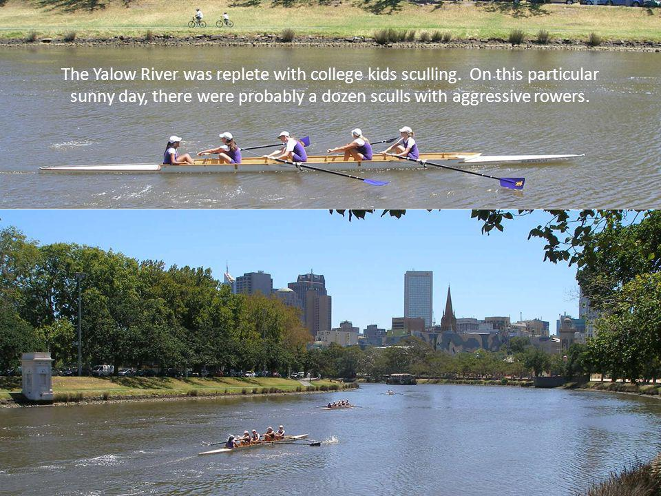 The Yalow River was replete with college kids sculling.