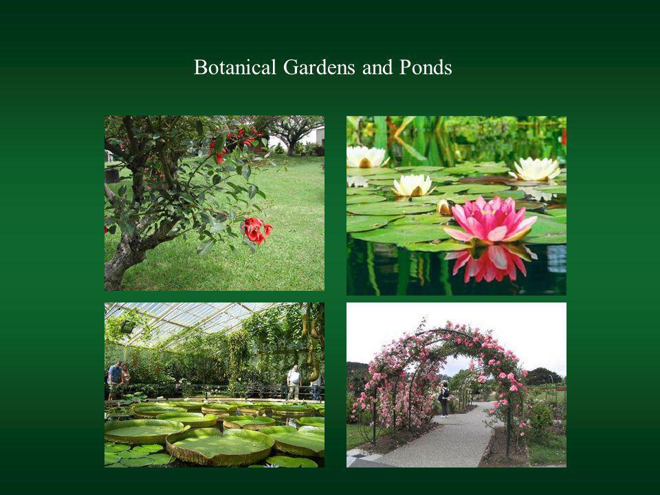 Botanical Gardens and Ponds