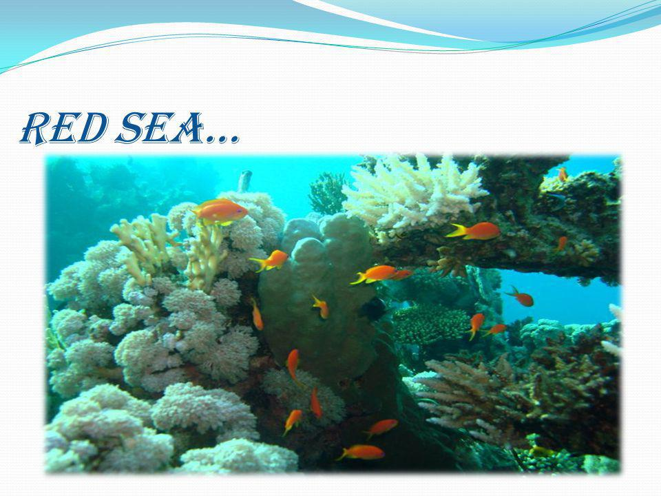 RED SEA…