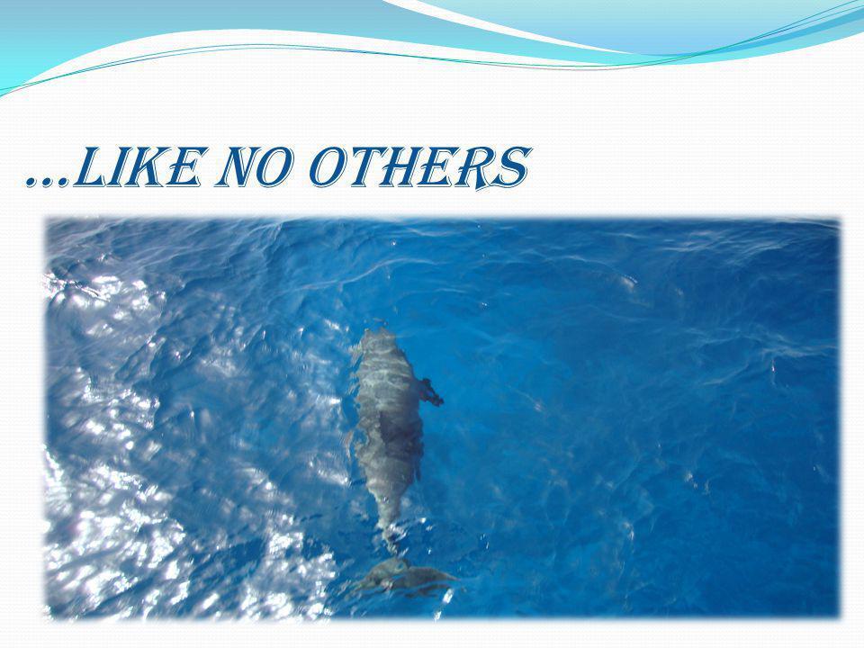 …LIKE NO OTHERS