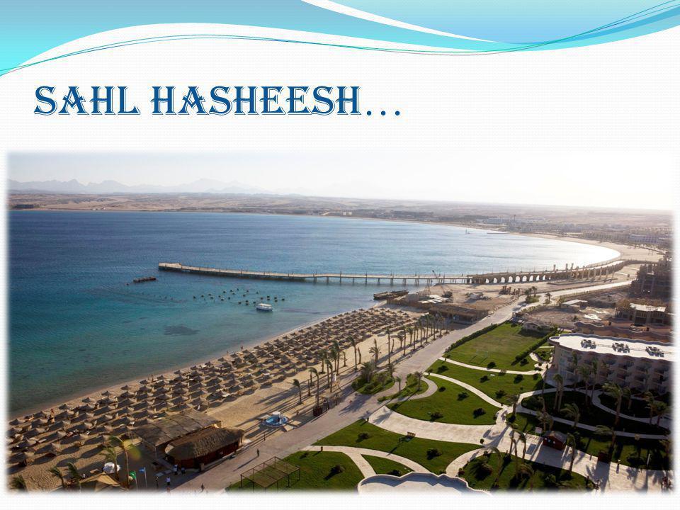 SAHL HASHEESH …