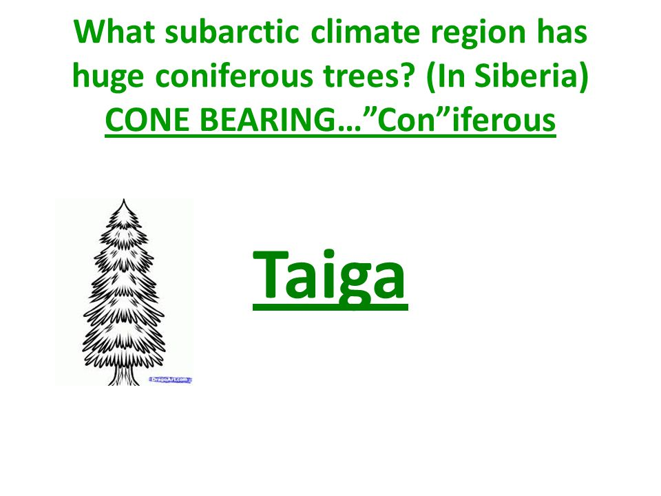 What subarctic climate region has huge coniferous trees (In Siberia) CONE BEARING…Coniferous Taiga