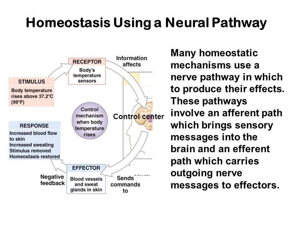 Homeostasis Using a Neural Pathway Control center Many homeostatic mechanisms use a nerve pathway in which to produce their effects.