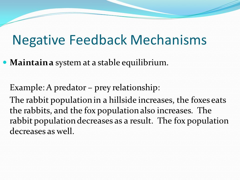 Negative Feedback Mechanisms Maintain a system at a stable equilibrium.
