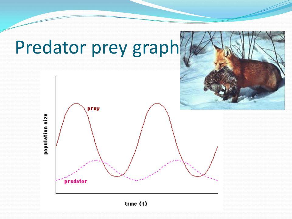 Predator prey graph