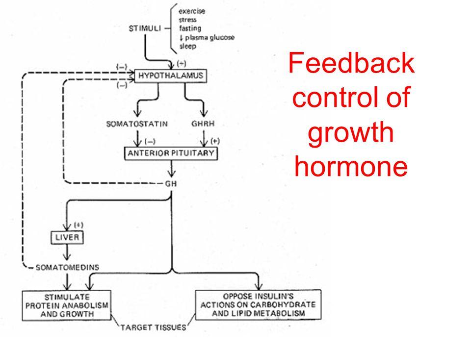 Feedback leads to restoration of homeostasis