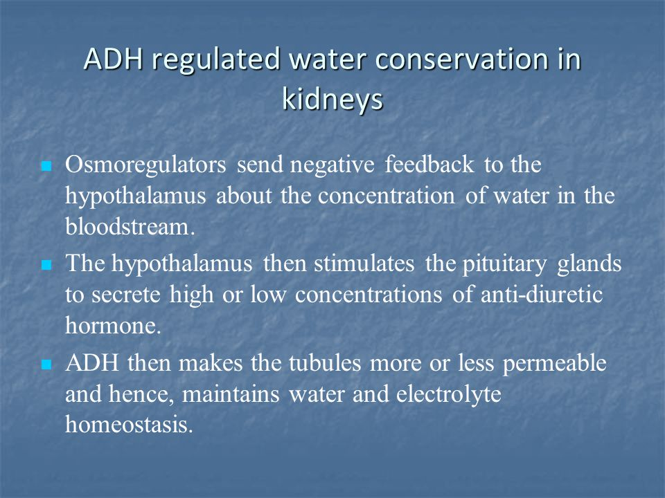 ADH regulated water conservation in kidneys Osmoregulators send negative feedback to the hypothalamus about the concentration of water in the bloodstr