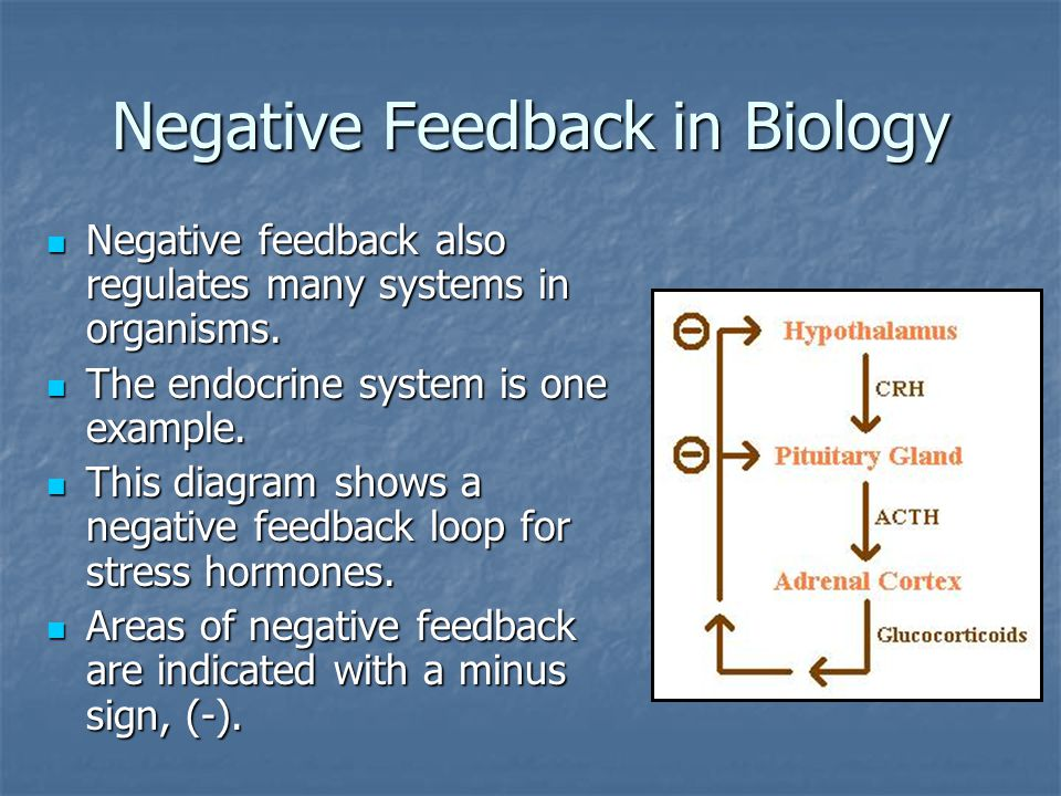 Negative Feedback in Biology Negative feedback also regulates many systems in organisms. Negative feedback also regulates many systems in organisms. T