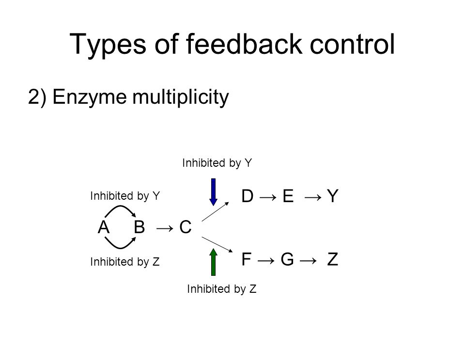 Types of feedback control 2) Enzyme multiplicity A B C D E Y F G Z Inhibited by Y Inhibited by Z Inhibited by Y