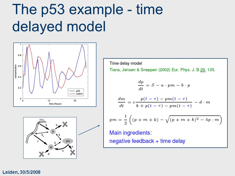 Leiden, 30/5/2008 The p53 example - time delayed model