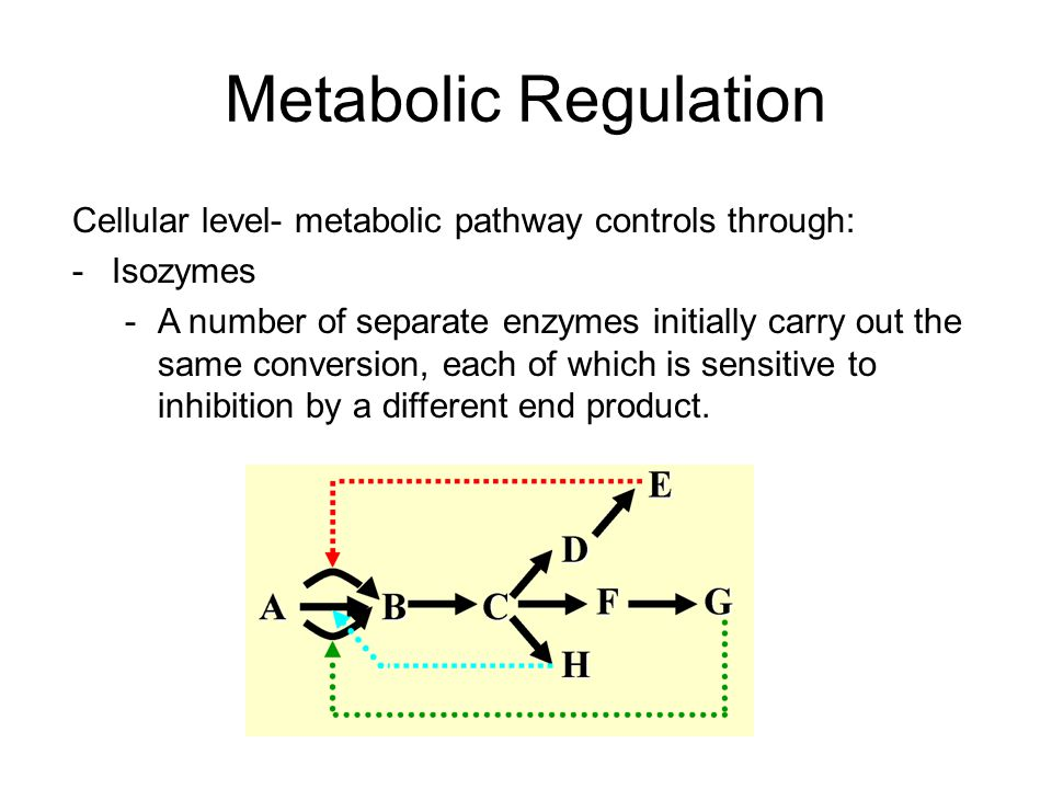 Metabolic Regulation Cellular level- metabolic pathway controls through: -Isozymes -A number of separate enzymes initially carry out the same conversi