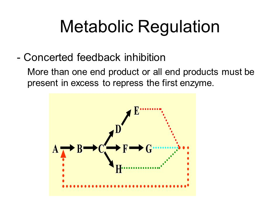 Metabolic Regulation - Concerted feedback inhibition More than one end product or all end products must be present in excess to repress the first enzyme.