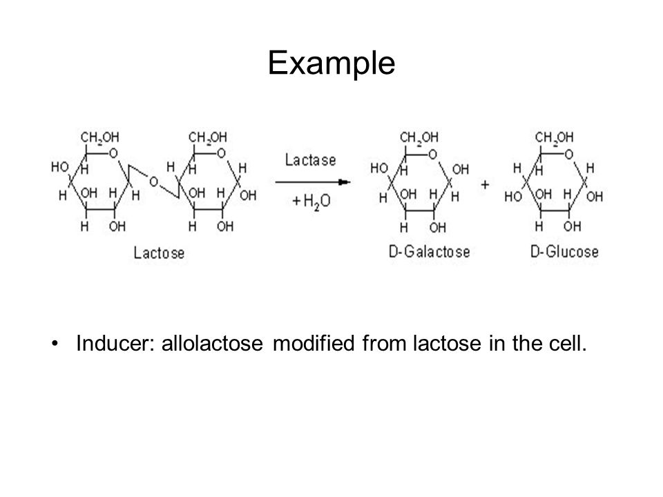 Example Inducer: allolactose modified from lactose in the cell.