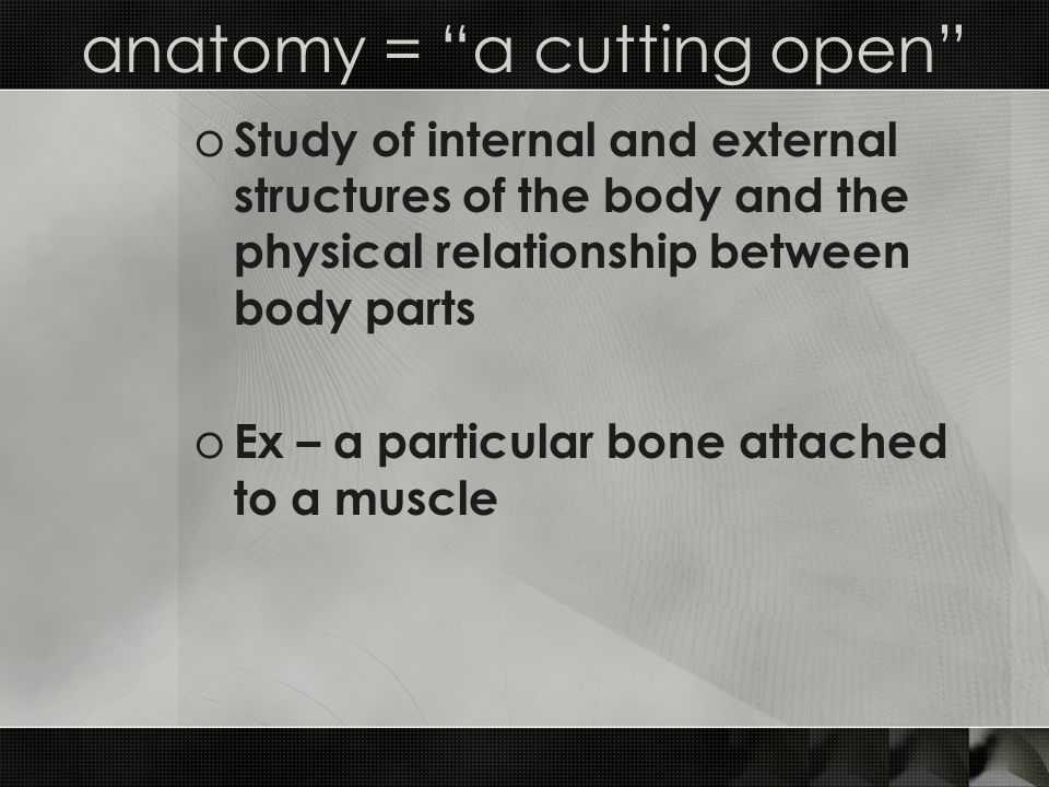 anatomy = a cutting open o Study of internal and external structures of the body and the physical relationship between body parts o Ex – a particular bone attached to a muscle