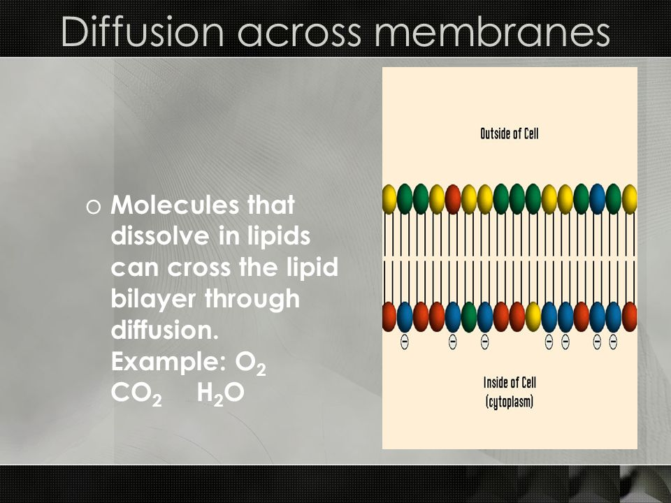 Diffusion across membranes o Molecules that dissolve in lipids can cross the lipid bilayer through diffusion.