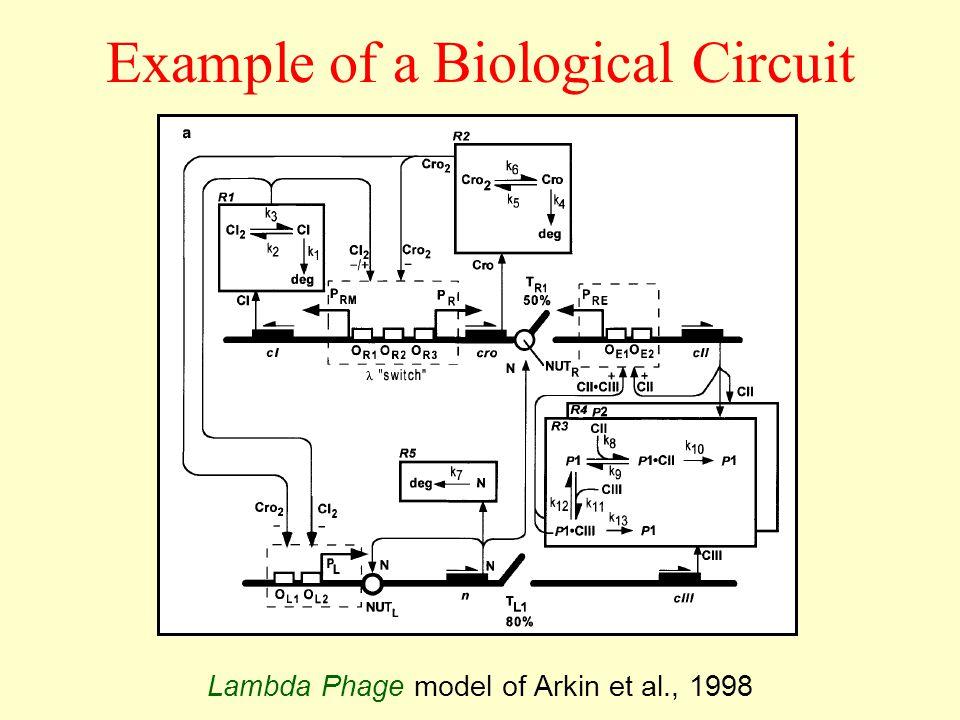 Lambda Phage model of Arkin et al., 1998 Example of a Biological Circuit