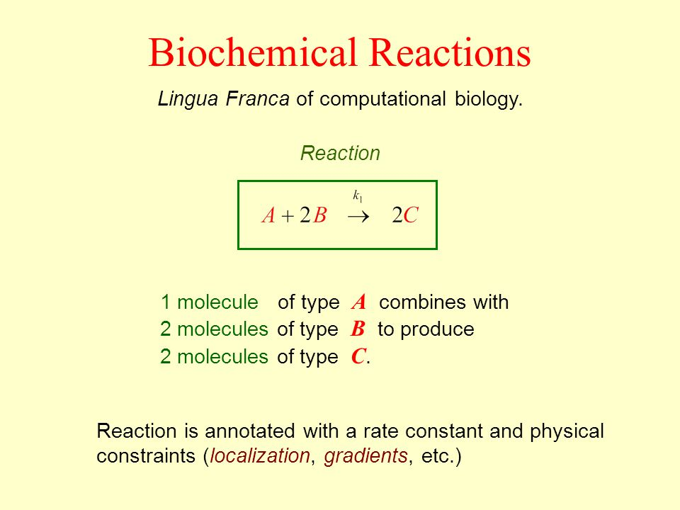 Biochemical Reactions Lingua Franca of computational biology. 1 molecule of type A combines with 2 molecules of type B to produce 2 molecules of type