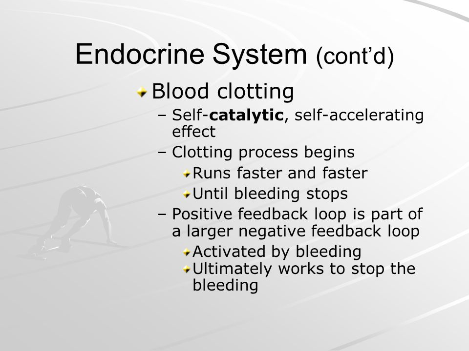 Endocrine System (contd) Blood clotting – –Self-catalytic, self-accelerating effect – –Clotting process begins Runs faster and faster Until bleeding s