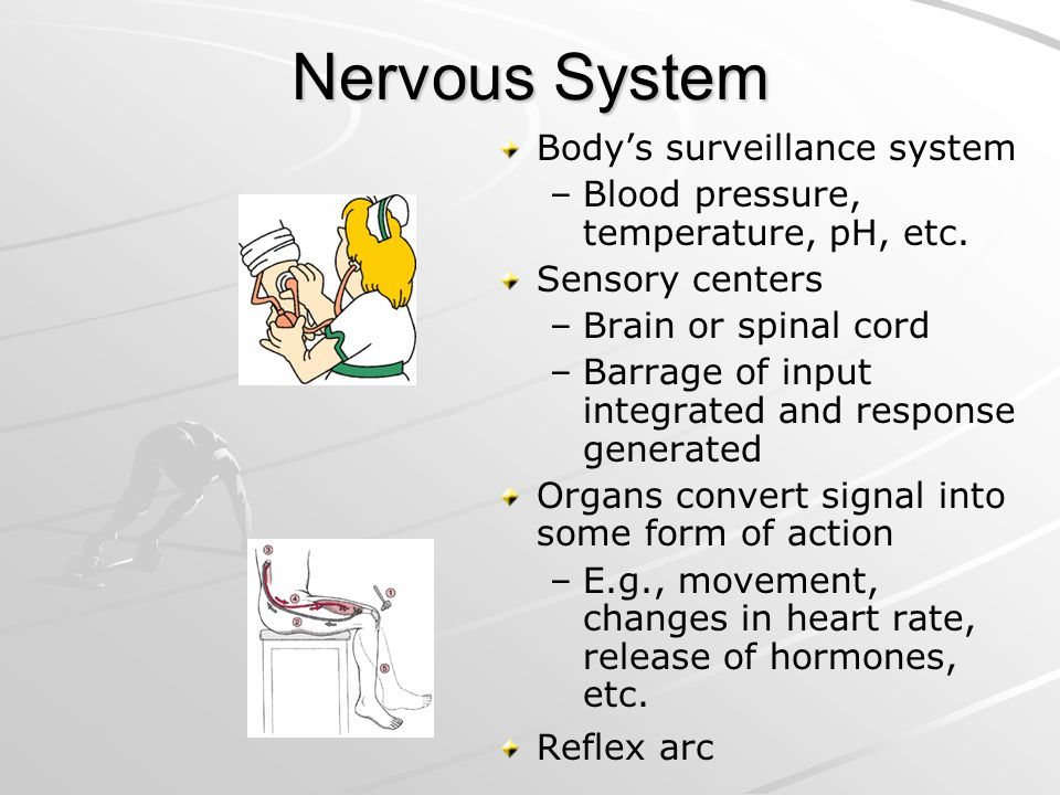 Nervous System Bodys surveillance system – –Blood pressure, temperature, pH, etc. Sensory centers – –Brain or spinal cord – –Barrage of input integrat