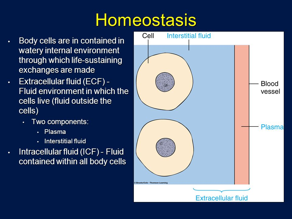 Homeostasis Body cells are in contained in watery internal environment through which life-sustaining exchanges are made Body cells are in contained in