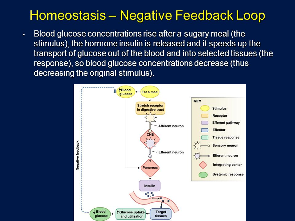 Homeostasis – Negative Feedback Loop Blood glucose concentrations rise after a sugary meal (the stimulus), the hormone insulin is released and it spee
