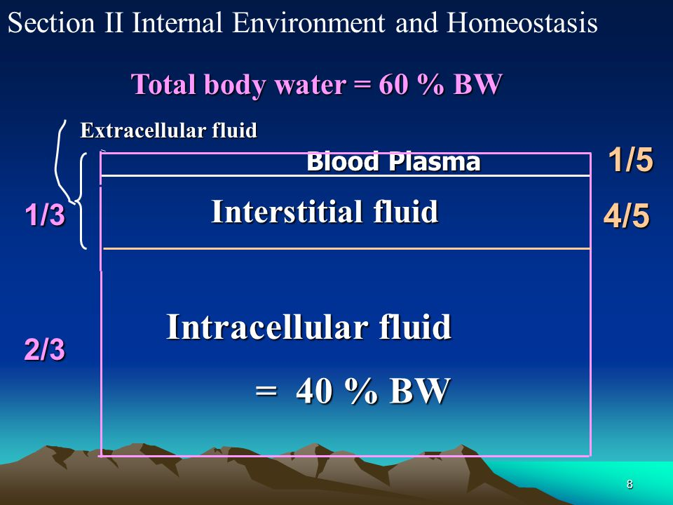 8 Section II Internal Environment and Homeostasis Interstitial fluid Blood Plasma Intracellular fluid Total body water = 60 % BW = 40 % BW Extracellul