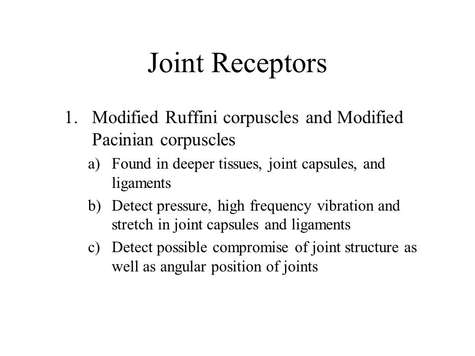 Joint Receptors 1.Modified Ruffini corpuscles and Modified Pacinian corpuscles a)Found in deeper tissues, joint capsules, and ligaments b)Detect press