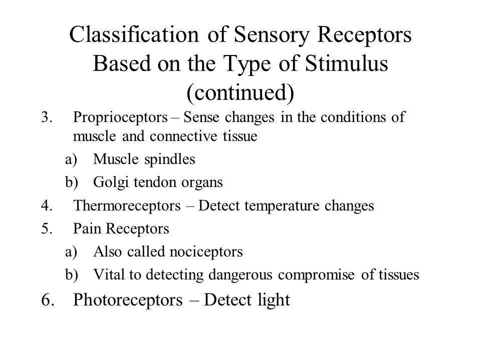 Classification of Sensory Receptors Based on the Type of Stimulus (continued) 3.Proprioceptors – Sense changes in the conditions of muscle and connect