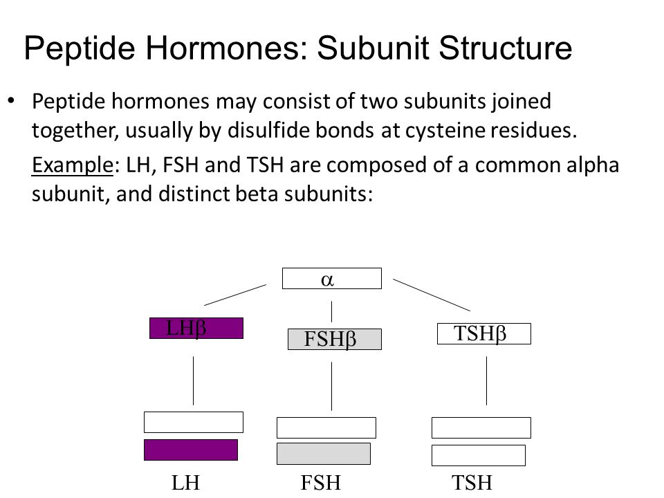 Peptide hormones may consist of two subunits joined together, usually by disulfide bonds at cysteine residues.