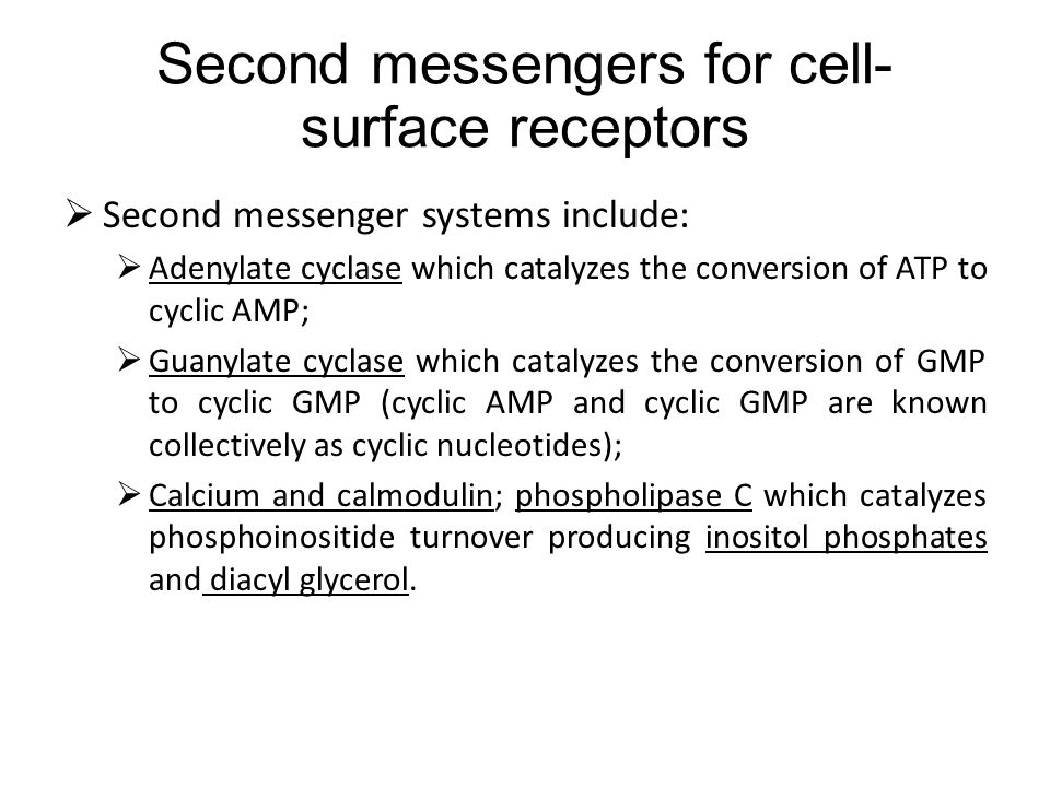 Second messengers for cell- surface receptors Second messenger systems include: Adenylate cyclase which catalyzes the conversion of ATP to cyclic AMP; Guanylate cyclase which catalyzes the conversion of GMP to cyclic GMP (cyclic AMP and cyclic GMP are known collectively as cyclic nucleotides); Calcium and calmodulin; phospholipase C which catalyzes phosphoinositide turnover producing inositol phosphates and diacyl glycerol.