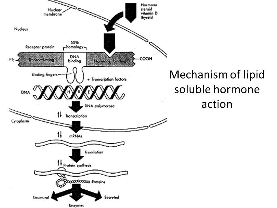 Mechanism of lipid soluble hormone action