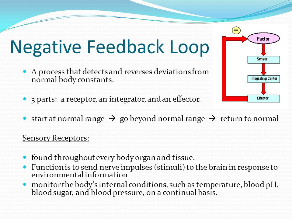 Negative Feedback Loop A process that detects and reverses deviations from normal body constants. 3 parts: a receptor, an integrator, and an effector.