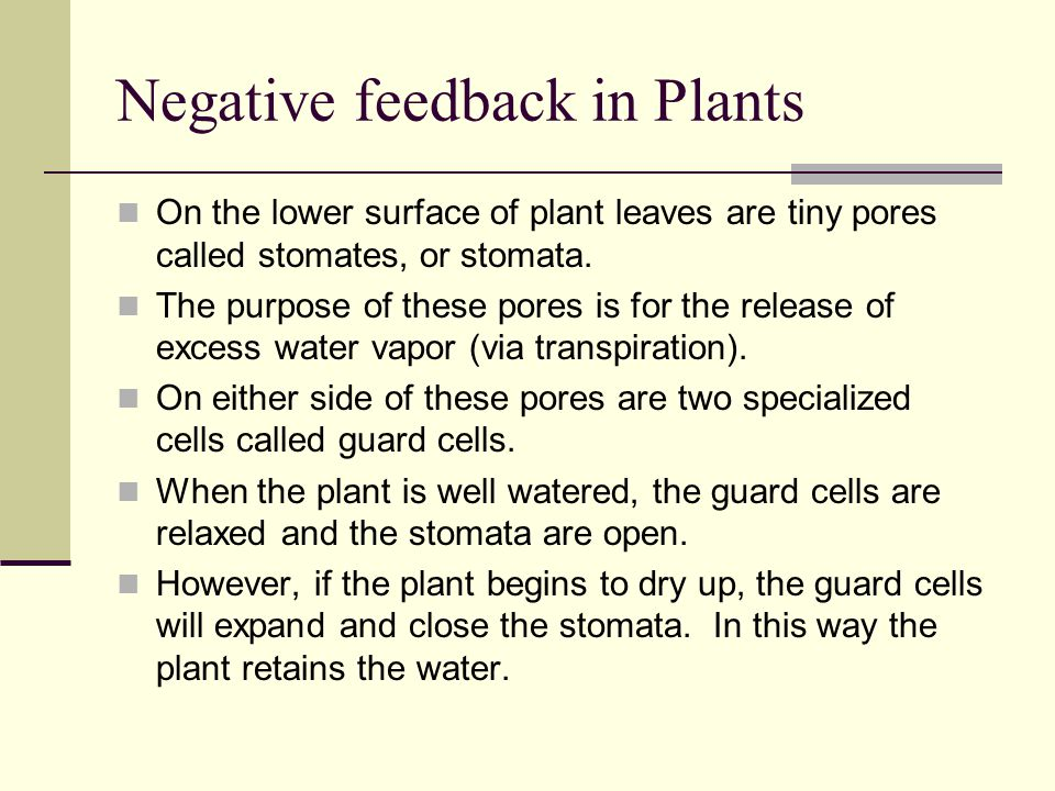 Negative feedback in Plants On the lower surface of plant leaves are tiny pores called stomates, or stomata. The purpose of these pores is for the rel