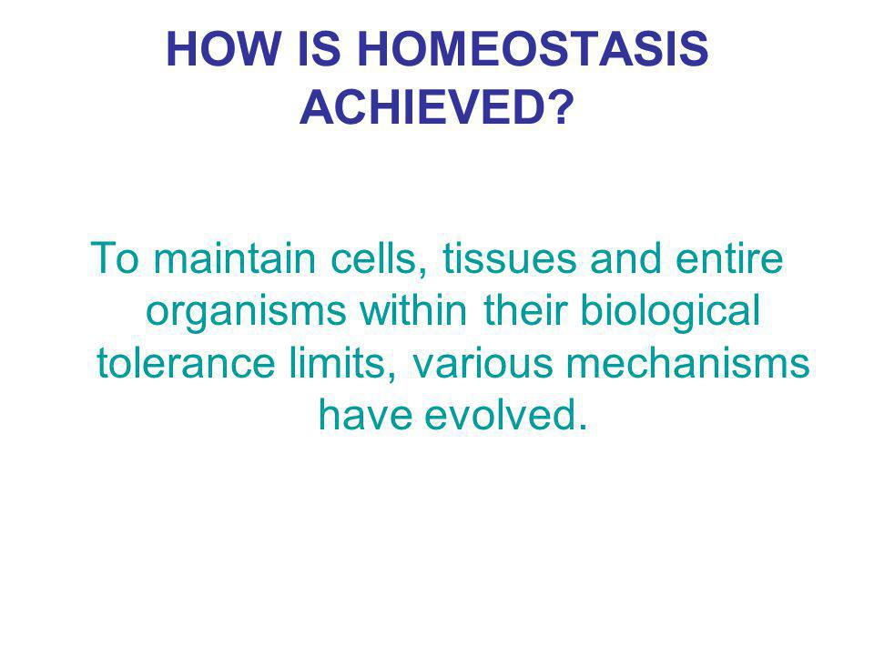 HOW IS HOMEOSTASIS ACHIEVED.
