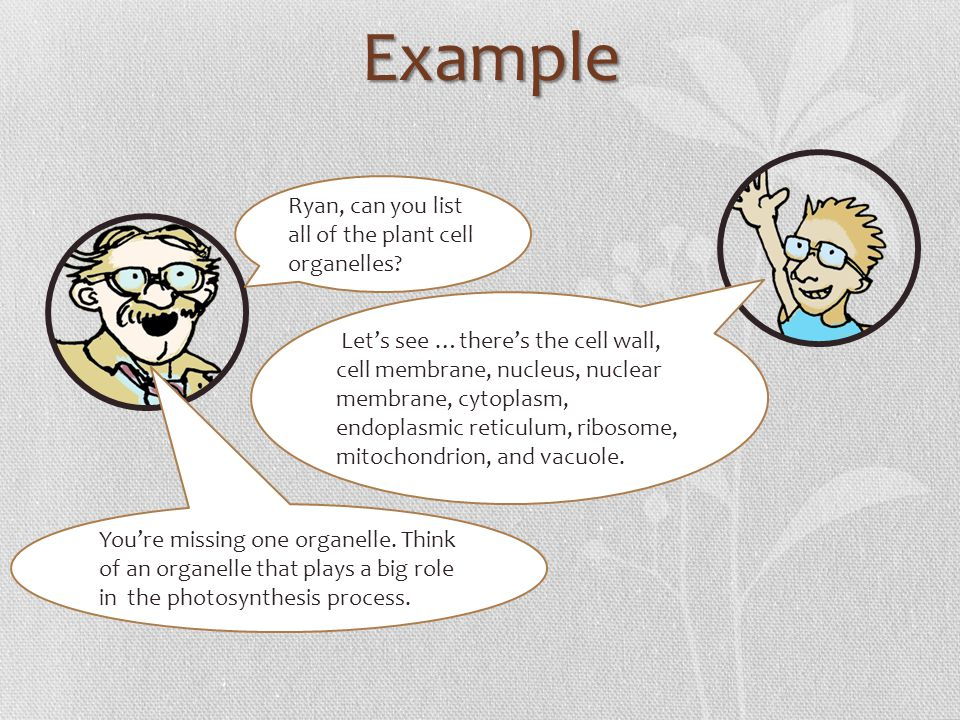 Example Ryan, can you list all of the plant cell organelles? Youre missing one organelle. Think of an organelle that plays a big role in the photosynt
