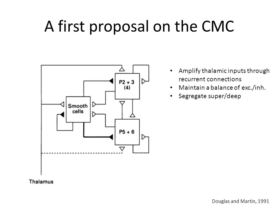 A first proposal on the CMC Douglas and Martin, 1991 Amplify thalamic inputs through recurrent connections Maintain a balance of exc./inh.